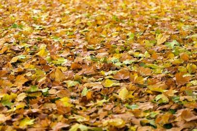 autumn-940401_640